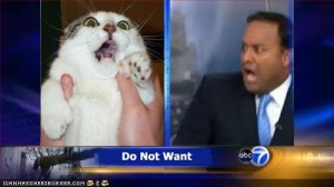 The local news loves cats. Cats, and never telling me how the weather is going to be in my town.