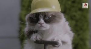 Demo-kitten expert